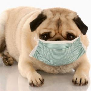 Animalele de companie, alergiile si riscul pentru sanatate